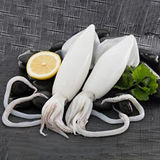 Products-Front-squid